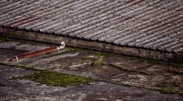 Co se starou střechou z eternitu