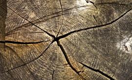 Vady dřeva