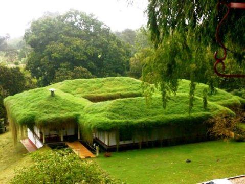 Zelená střecha s trávou