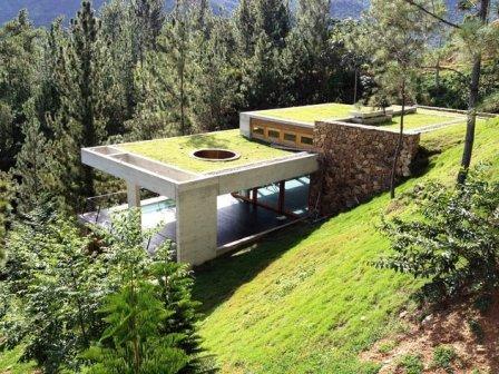 Extenzivní zelená vegetační střecha