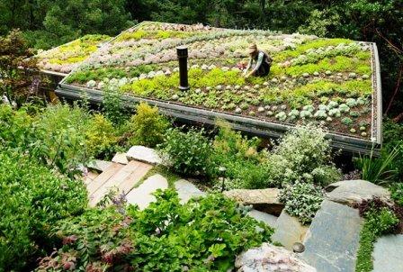 Intenzivní zelená vegetační střecha