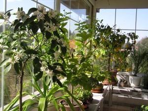 zimní zahrada subtropická