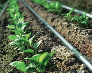 Kapková závlaha záhonu a skleníku