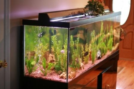 Akvárium jako součást nábytku