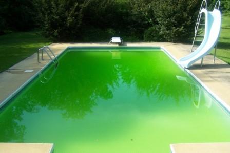 Voda se kvůli řasám zbarvila do zelena