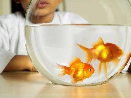 Je na uvážení každého, jaký typ akvária je pro ryby vhodný, a který naopak ne