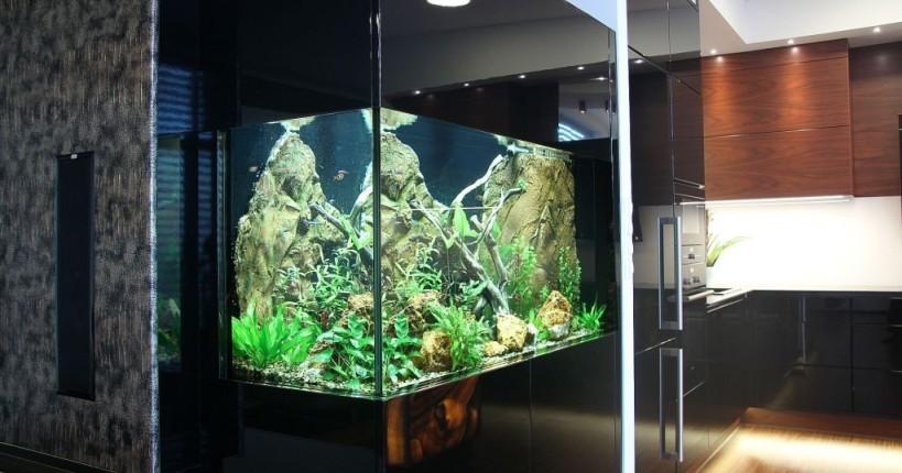 Akvárium dokáže spojit prostor - zde kuchyně a obývacího pokoje