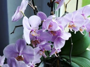 orchid-2667984_640-min