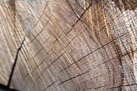 Vady dřeva – trhliny
