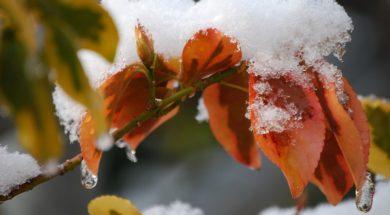 Zimní údržba zahrady