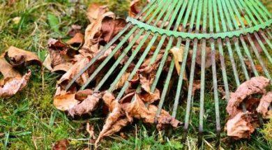 leaves-2901684_640-min