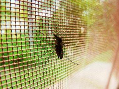 Ochrana před hmyzem v letních dnech