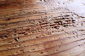 Červotoč za sebou ve dřevě zanechá malé dírky a specifické chodbičky.