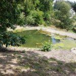 Jak se zbavit vláknité řasy v zahradním jezírku?