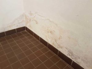 Vlhkost v patě zdiva může být způsobena porušenou hydroizolací, ale také kondenzací vodní páry